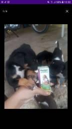 Cachorrinhos para doação já estão vermifugados
