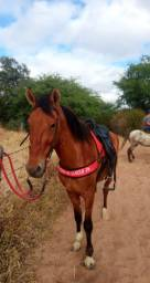 Cavalo mestiço campolina