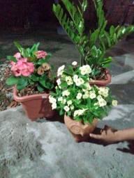 Lindas plantas p/ decoração.