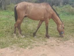 Vendo cavalo pra puxar Carroça