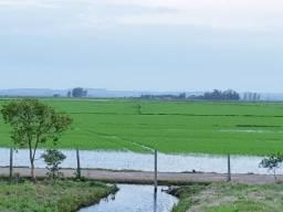 Fazenda 282 ha Arrozeira na Freeway Glorinha