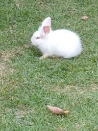 3 coelhos por 80 reais