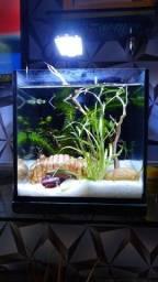 Luminárias para aquario