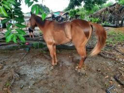 Cavalo alinhando na direita