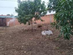 Vendo terreno murado bem localizado no bairro Angelim 1