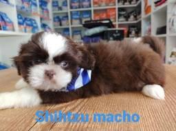 SHIHTZU MACHO !!!!!
