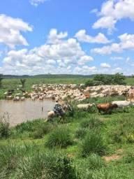 Fazenda em Matupá -MT 1.000 alqueires, com 700 aberto.