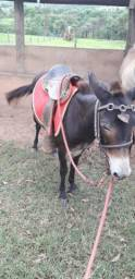 Vendo mini burro