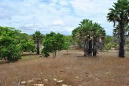 Fazenda Carretão