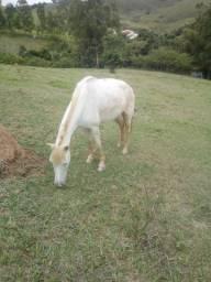 Vendo cavalo e égua de charrete