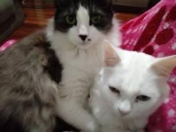 Dôo 2 gatinhas