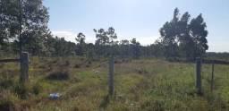 Sítio 83 ha com 15ha de Eucaliptos em Tramandaí