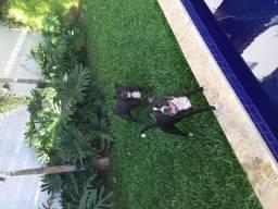 Filhote de staffordshire terrier com america staffordshire leia anuncio