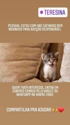 Gatinhos para adocao responsável