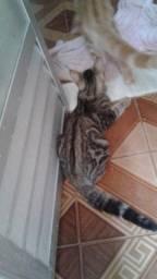 Doa- se gatinhos