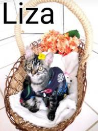 Lindas gatinhas para adoção responsável!