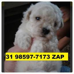 Canil Premium Filhotes Cães BH Poodle Beagle Basset Shihtzu Yorkshire Maltês