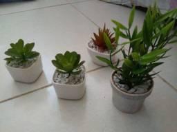 Mini plantas e flores