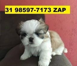 Canil Filhotes Líder Cães BH Shihtzu Poodle Beagle Lhasa Maltês Yorkshire Basset