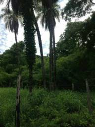 Fazenda 100 Alqueires Porto Nacional Tocantins