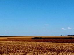 Arrendamento de área rural em Nova Mutum MT