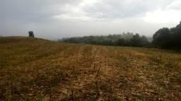 Compro propriedades de terra em São Carlos - SC e Águas de Chapeco - SC
