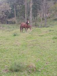 Égua mansa com potrinho macho ao pé