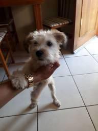 Estou doando essa cadelinha, ela tem 3 meses
