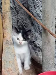 Adoção de lindas filhotes de gata!!!