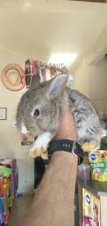 Coelhinhos filhotes super mansos