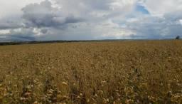 Patrocínio-MG vende-se excelente fazenda
