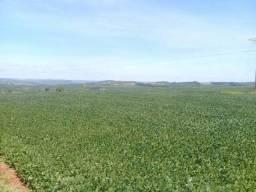Excelentes fazendas no Paraná