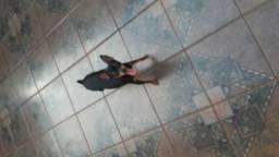 Linda cachorrinha yhork Shire