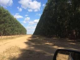 Floresta Eucalipto - Joao Pinheiro MG