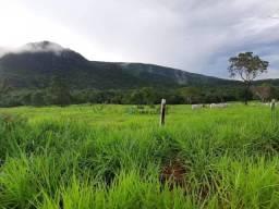 MARAVILHOSA FAZENDA PARA PECUÁRIA E AGRICULTURA