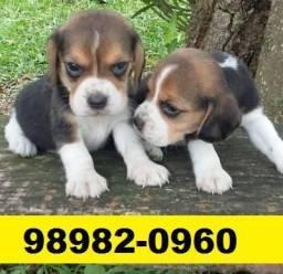 Canil-Filhotes Cães Beagle Basset Lhasa Poodle Yorkshire Shihtzu Maltês Bulldog