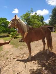 Égua Quarto de milha com Crioulo