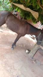 Vendo cavalo máquina de pista
