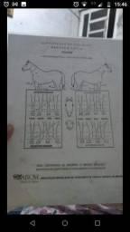 Cavalo quarto de milha puro com documento