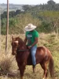 Vendo estes cavalo e ésta égua os dois machador.