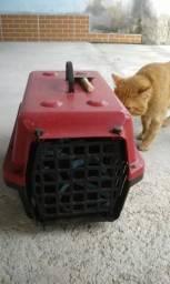 Doa-se um gato
