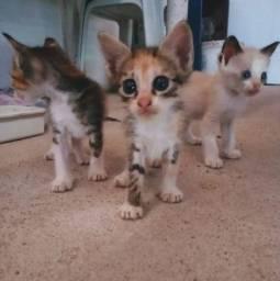Doação de gatas