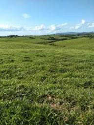 Fazenda Próxima de Ibaiti oportunidade é Agora!