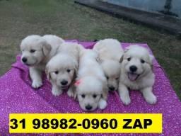 Canil Cães Filhotes em BH Golden Pastor Akita Labrador Chow Chow Dálmata