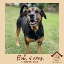 Título do anúncio: Cão cachorro adoção responsável