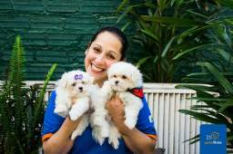 Maltês, lindos e fofos - Filhotes com total segurança - Janaina