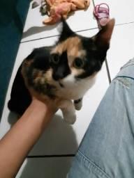 Estou doando um gato lindo finhote