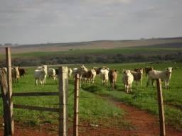 Ótima área para lavoura e pecuária no município de Santiago/RS. (113,84 ha)
