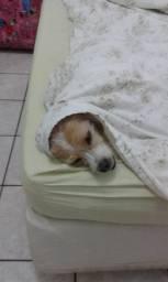 Cachorrinhos porte PP para adoção