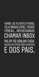 Filhotes Fila Brasileiro